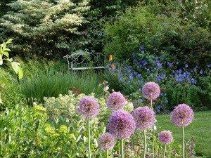 """Jardin Clare Oberon """" la Maison"""""""