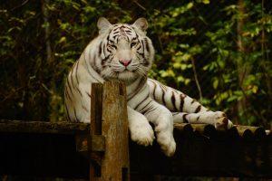 visiter le zoo de trégomeur, plus de 50 espèces menacées